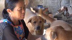 วอนช่วย! หญิงสงขลาเลี้ยงหมาจรจัด ยังไม่ฉีดวัคซีน หวั่นติดเชื้อพิษสุนัขบ้า