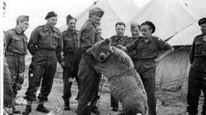 """มีจริงนะ! กองทัพโปแลนด์ใช้หมี ชื่อ """"Wotjek"""" ต่อสู้สงครามนาซี"""