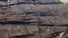 ตื่นตา! ลานหินดินดาน อายุโบราณพันปี ที่เที่ยวใหม่ใน จ.กระบี่