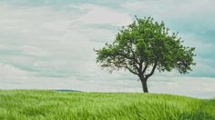 คำศัพท์ของ ชื่อต้นไม้ ภาษาไทย