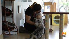 ทาสหมา-แมว ผวา !! เตือนคาเฟ่หมา-แมว ระวังพิษสุนัขบ้า !!