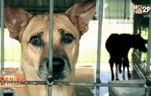ชะตากรรมของสุนัข กิน ฆ่า ค้าข้ามชาติ ตอน 2