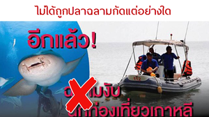 กรม ทช.ยันแล้ว! นักท่องเที่ยวเกาหลี ไม่ได้ถูกปลาฉลามกัด