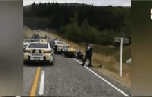 ฝูงแกะช่วยสกัดโจรขโมยรถในนิวซีแลนด์