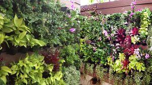 เพิ่มพื้นที่สวน ให้สวย ด้วยการ จัดสวนแนวตั้ง