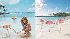 """""""ชายหาดนกฟลามิงโก้"""" แห่งเดียวในโลก! มันก็จะสีชมพูหน่อยๆ"""