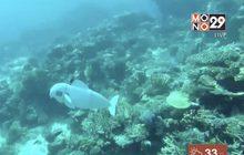 นักวิจัยทดสอบหุ่นยนต์ปลาสำรวจใต้ทะเล