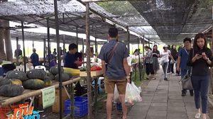 นักท่องเที่ยวแห่อุดหนุน ผักปลอดสารพิษ ที่ชาวเขานำมาขายตลาดนัดชาวดอย