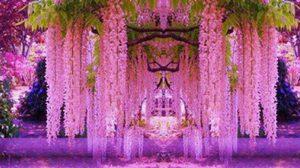 ซุ้มดอกไม้ ดอกวิสทีเรีย สีม่วงสวยยวนใจ