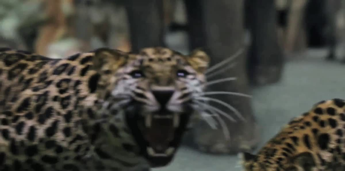 [Teaser] Zoo สัตว์ สยอง โลก ปี 2