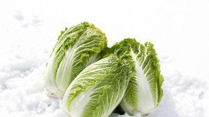 ปลูกเอง กินเอง สุขภาพดีแน่! วิธีปลูกผักกาดขาว ไว้ กินเอง ในบ้าน