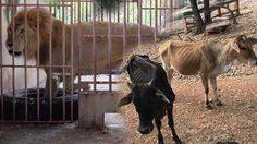 เพจดังแฉภาพสัตว์ในวัดเสือสุดเวทนา ผอมซูบจนเห็นซี่โครง!!