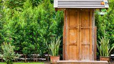 ต้นไม้เสริมดวง สำหรับ 12 ราศี ที่ควรปลูกไว้ที่บ้านเพื่อความเป็นมงคล