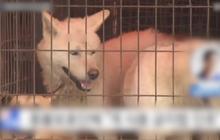 ศาลเกาหลีใต้ตัดสินฆ่าสุนัขเพื่อบริโภคเนื้อผิดกฎหมาย