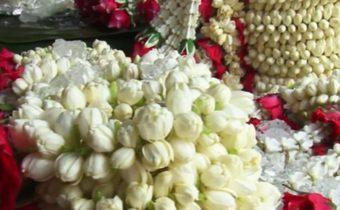 ราคาดอกมะลิวันแม่ปีนี้ทรงตัว