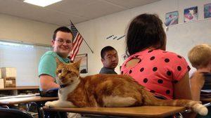 Bubba แมวตัวแรก ที่มีบัตรประจำตัวนักเรียน