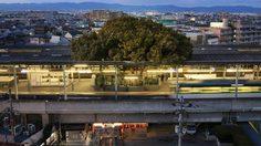 อยู่ร่วมกันได้! ญี่ปุ่นสร้างสถานีรถไฟ  ล้อมรอบต้นไม้เก่าแก่กว่า 700 ปี!