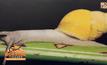 จุฬาฯ-สกว.เปิดตัวหอยทากชนิดใหม่ของโลก