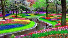 ความงามแห่ง ฤดูใบไม้ผลิ ที่ คิวเคนฮอฟ เนเธอร์แลนด์