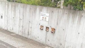 รีทวีตหนัก! แก๊งหมาชิบะญี่ปุ่น ยื่นหัวออกมาทักทายแบบนี้