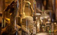 มีของคนแล้ว พิพิธภัณฑ์อวัยวะเพศชาย จากสัตว์ทุกชนิดที่ใหญ่ที่สุดในโลก