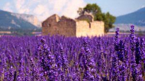 Provence ( โพรวองซ์ ) ยกก๊วนชวนเพื่อนเที่ยว ฝรั่งเศสตอนใต้