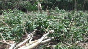 พายุงวงช้าง พัดถล่มระยอง ทำบ้านประชาชนเสียหายกว่า 30 หลัง