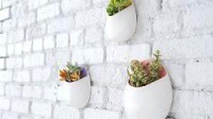 DIY ผนังห้อง ให้สวยด้วย สวนแนวตั้ง