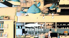 บุกเมืองฉลาม 'Whale Shark Books' เมืองนักล่าการเรียนรู้