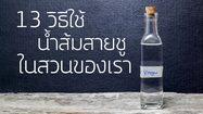 13 วิธีใช้ น้ำส้มสายชู ให้เป็นประโยชน์ ในสวนและพื้นที่รอบบ้าน