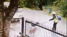 วิจารณ์สนั่น!! หมาวิ่งไล่จะกัด เจอชายเปิดเครื่องตัดหญ้าปั่นคอ