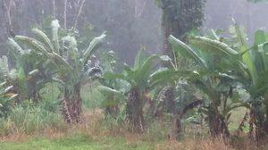 เตือนไคตั๊ก ใต้ตอนล่างฝนหนักบางพื้นที่-เหนืออีสานอากาศหนาว