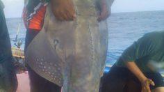 จวกยับ! นักตกปลา จับสัตว์หายาก โพสต์อวดลงโซเชียล