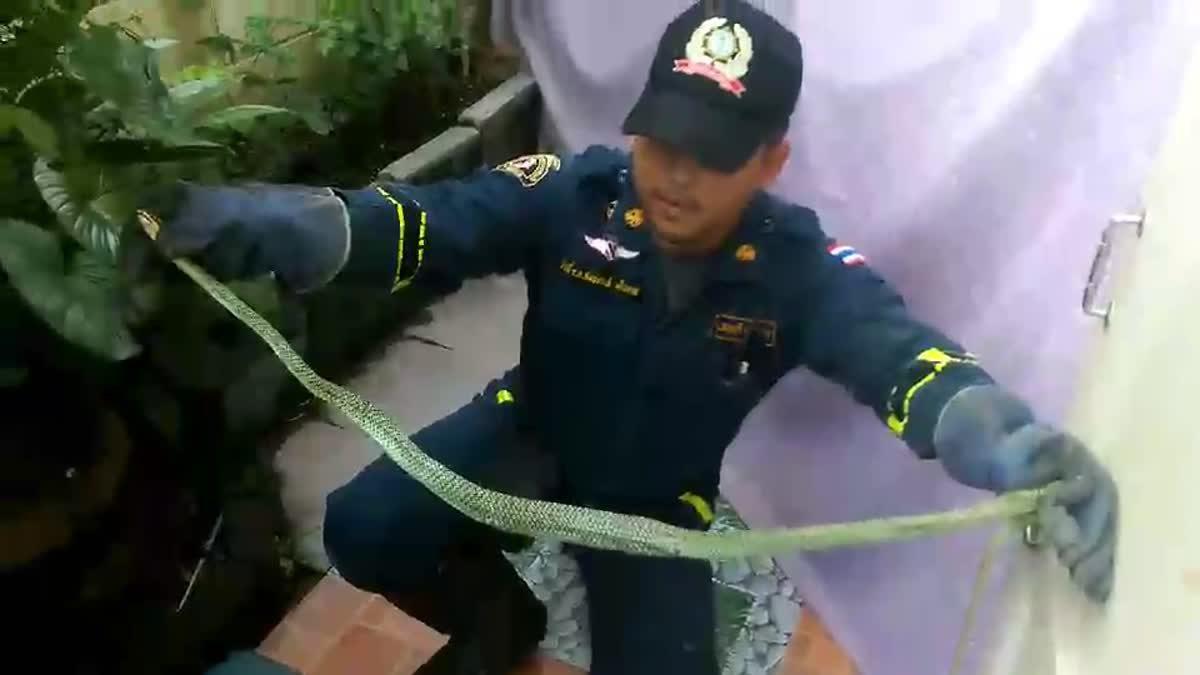 จนท.จับงูเขียว เลื้อยเข้าบ้าน (16-10-60)