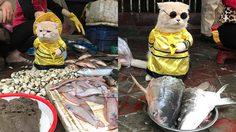ร้ายกาจสุด ๆ แมวขายปลา เหมียวในมาดพ่อค้าสุดเท่ จนโลกออนไลน์ต้องหลงรัก
