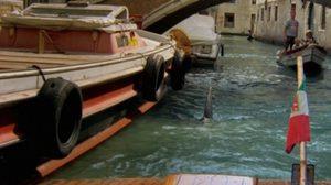 """สยอง! เร้นลับ! ระทึก! กับ """"Shark In Venice ฉลามเพชฌฆาตเวนิสเลือด"""""""