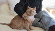 แก็ดเจ็ต เจ๋งๆ!! นาฬิกาสำหรับคนรักน้องแมว