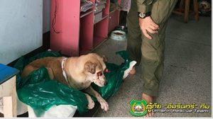 เวทนา!! สุนัขตาอักเสบจนถลนน่ากลัว ด้านกู้ภัยรุดช่วยเหลือ