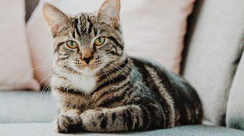 8 สิงหาคม วันแมวโลก (International Cat Day) วันแห่งแมว เมี๊ยววว