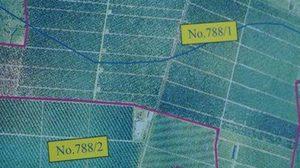 ส.ป.ก.ลุย! ตรวจ 2สวนส้มในเชียงใหม่ รุกพื้นที่ป่า