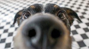 ผ่อนคลายสบายจมูก! 4 วิธี สร้าง กลิ่นหอม สดชื่นภายในบ้าน