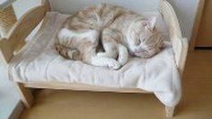 ที่นอนน้องแมว สุดน่ารัก ไอเดียจากเตียงตุ๊กตา IKEA