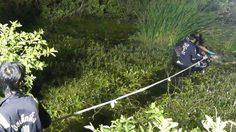 หนุ่มเลี้ยงวัวผงะ! ได้กลิ่นเหม็นเน่า สุดท้ายเจอศพลอยอืดกลางบ่อ