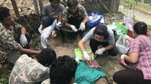 สัตวแพทย์ช่วยกวางบาดเจ็บ หลังต่อสู้กันเองเพื่อชิงความเป็นจ่าฝูง