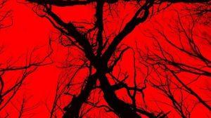 จาก The Woods สู่ BLAIR WITCH ภาคต่อหนังสยองตำนาน Found Footage