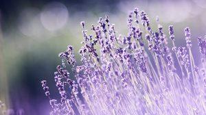 ประโยชน์ของดอกไม้ ที่นอกจากจะสวยแล้วยังมีประโยชน์อื่นด้วย