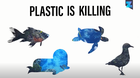 Is Plastic Changing Our Oceans?