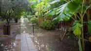 เทคนิคการดูแลต้นไม้ ในช่วง ฝนตกหนัก น้ำท่วมสวน