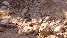 พบหลุมศพหมู่ 400 ศพ โครงกระดูก หัวกะโหลก มหาศาล ในอิรัก