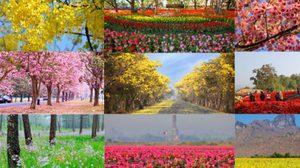 ชมเส้นทางดอกไม้ทั่วไทย Dream Destinations 2 ตลอดปี 58